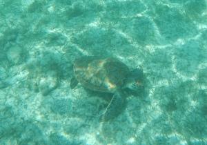 Snorkling på Tobago Cays