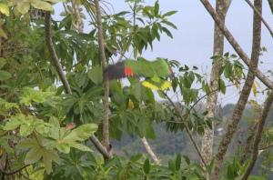 Papegøyer i trærne