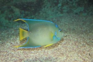 På aquarium og Zoo på Bermuda