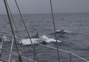 Finnhval og delfiner