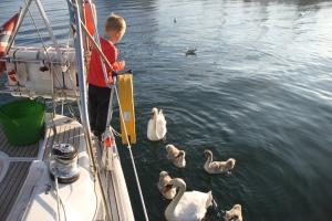 Jonas mater svanene i Port Anne